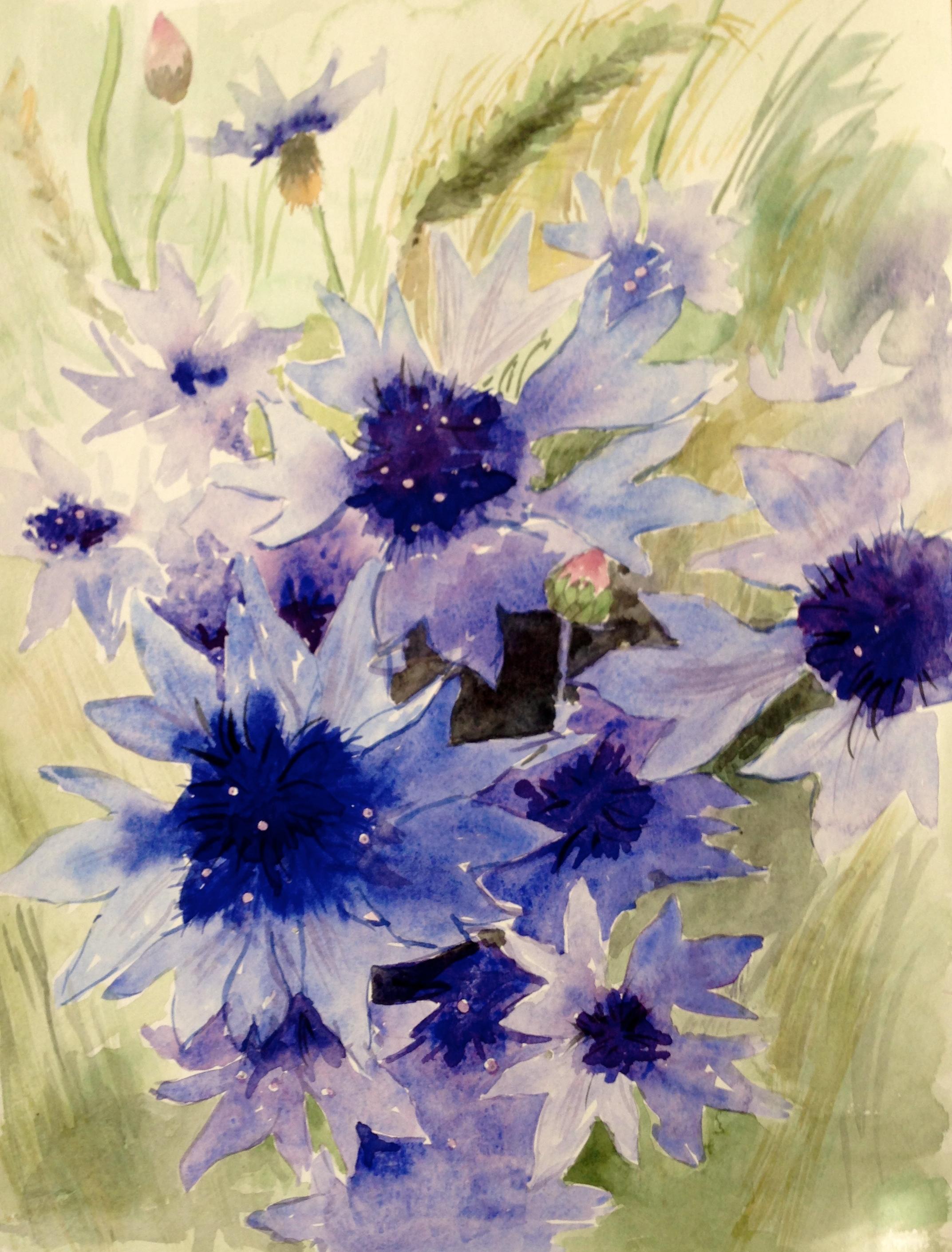 27-korenbloemen/aquarel