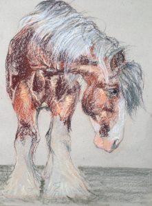 Werkpaard (33)