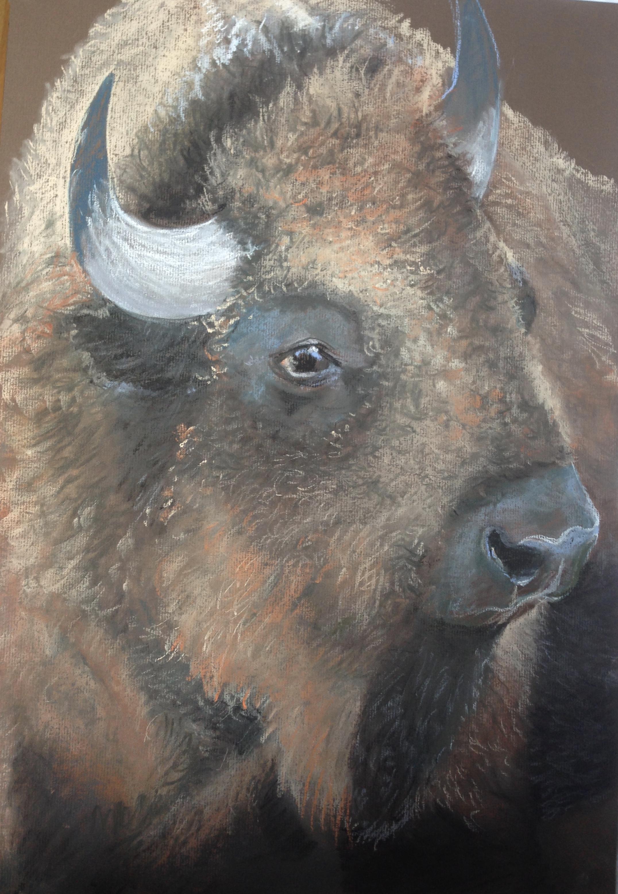 Bison (77)