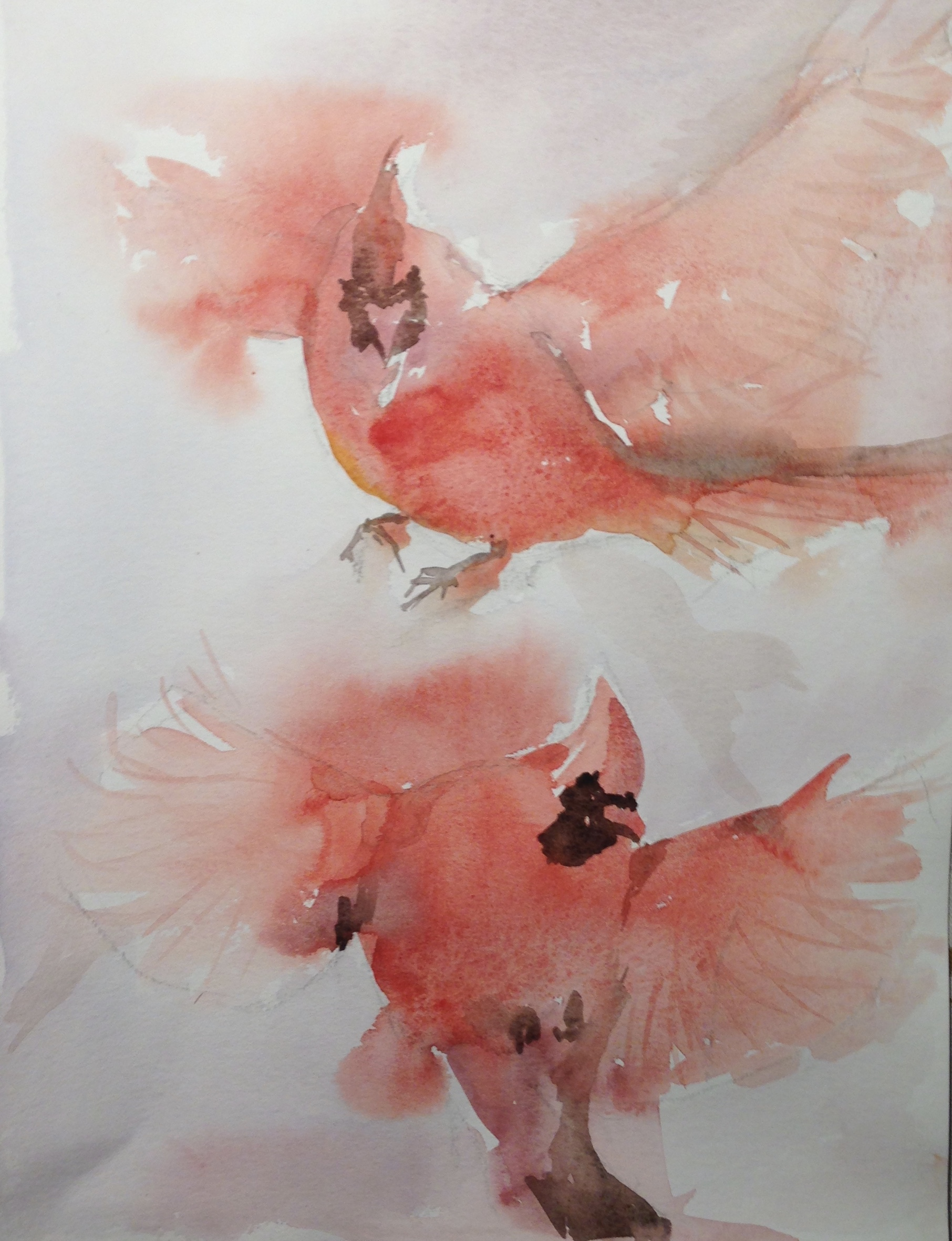 56-Rode cardinalen/aquarel