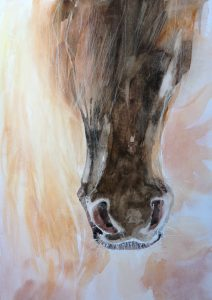 Paardenhoofd in de zon (120)