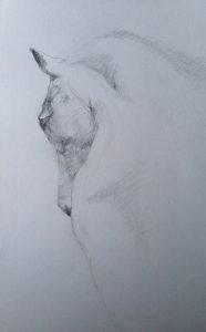 7-Tekening paard/potlood