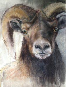 131-Ram/gewassen pastel 50 X 70cm