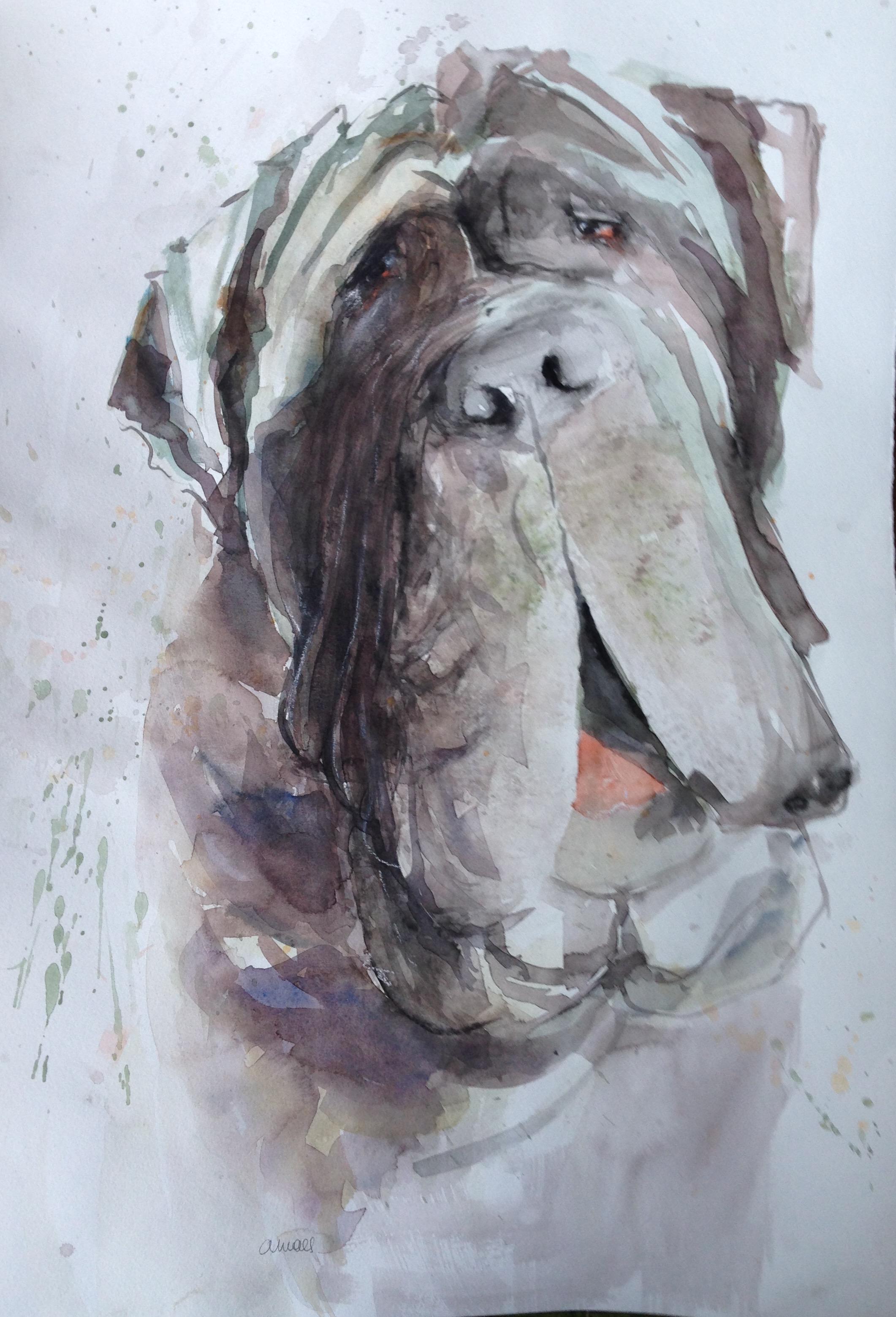 140-Mastiff/aquarel 30 X 50cm