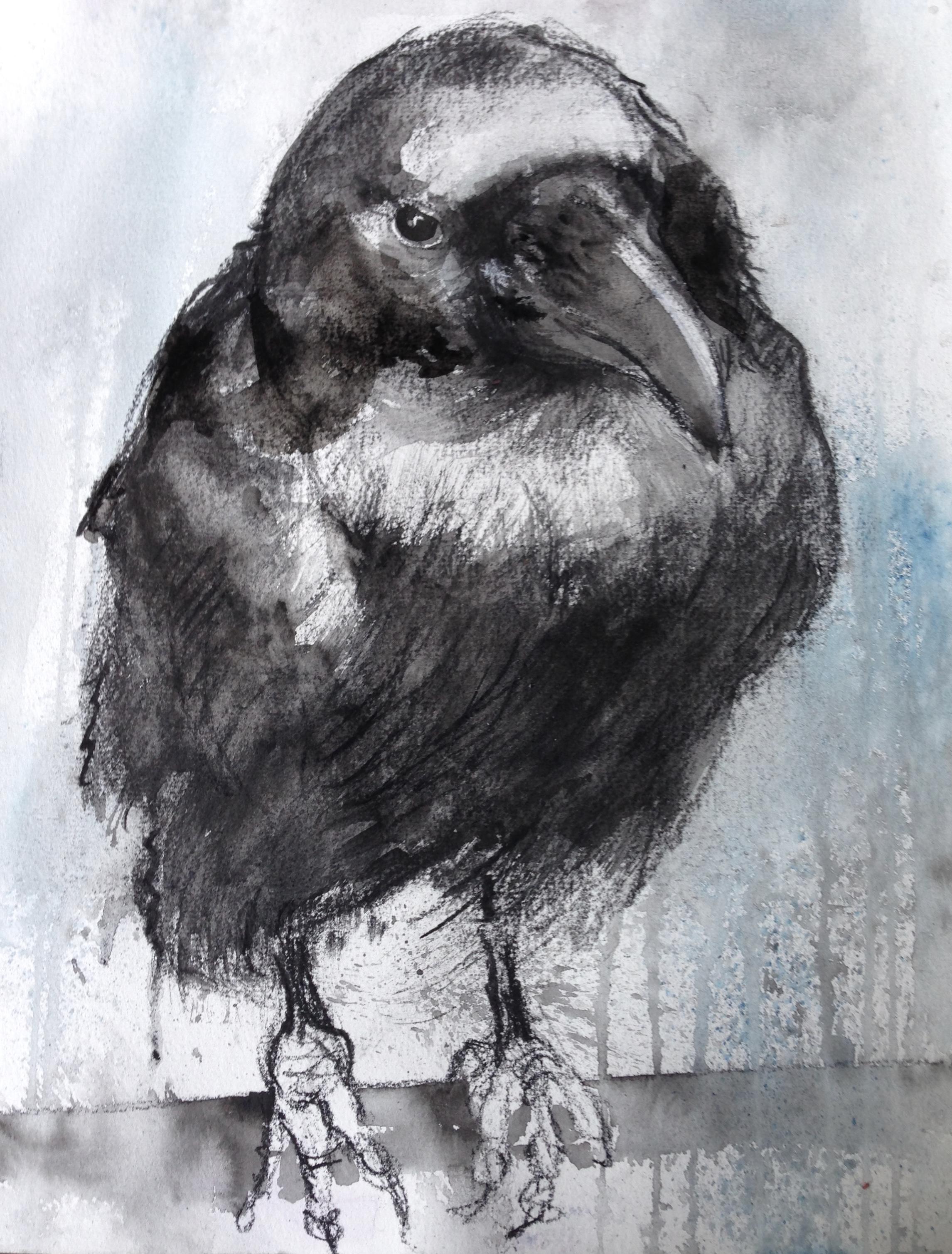 155-Crow/aquarel/houtskool 30X40cm