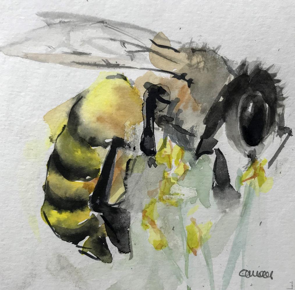 I3-bee/aquarel 12X12cm