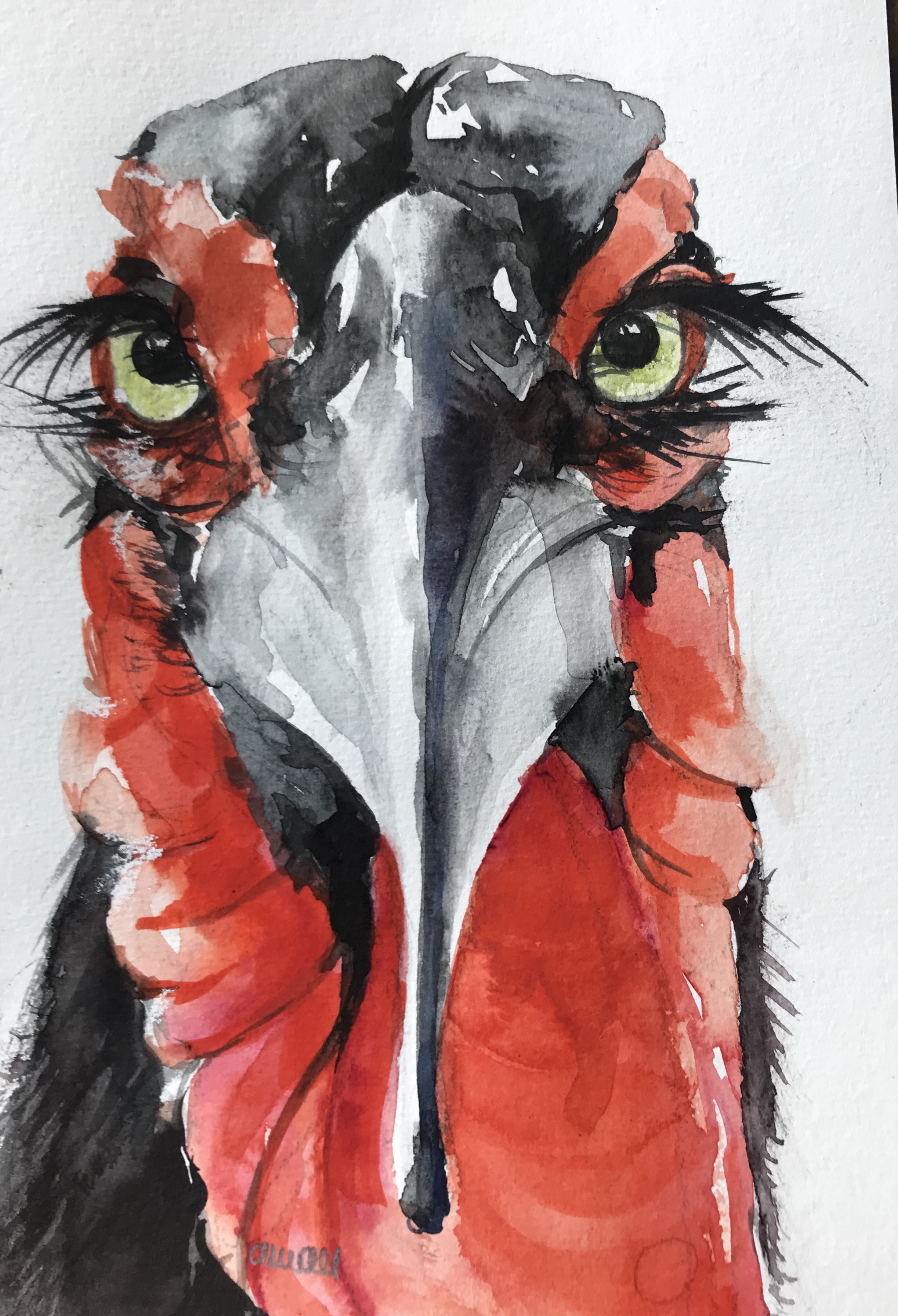 182- Southern Ground Hornbill 14x20cm