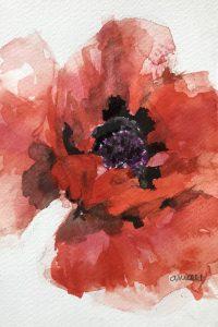 205-Poppy/Aquarel 12X18cm