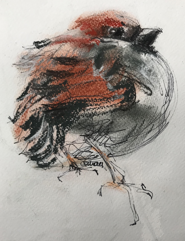210-sparrow/kleurenschets 14X18cm