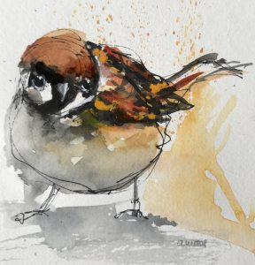 222-sparrow/aquarel 13X13cm