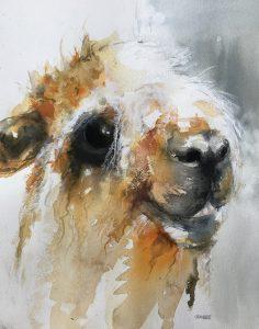 229- Alpaca/aquarel 30x40cm