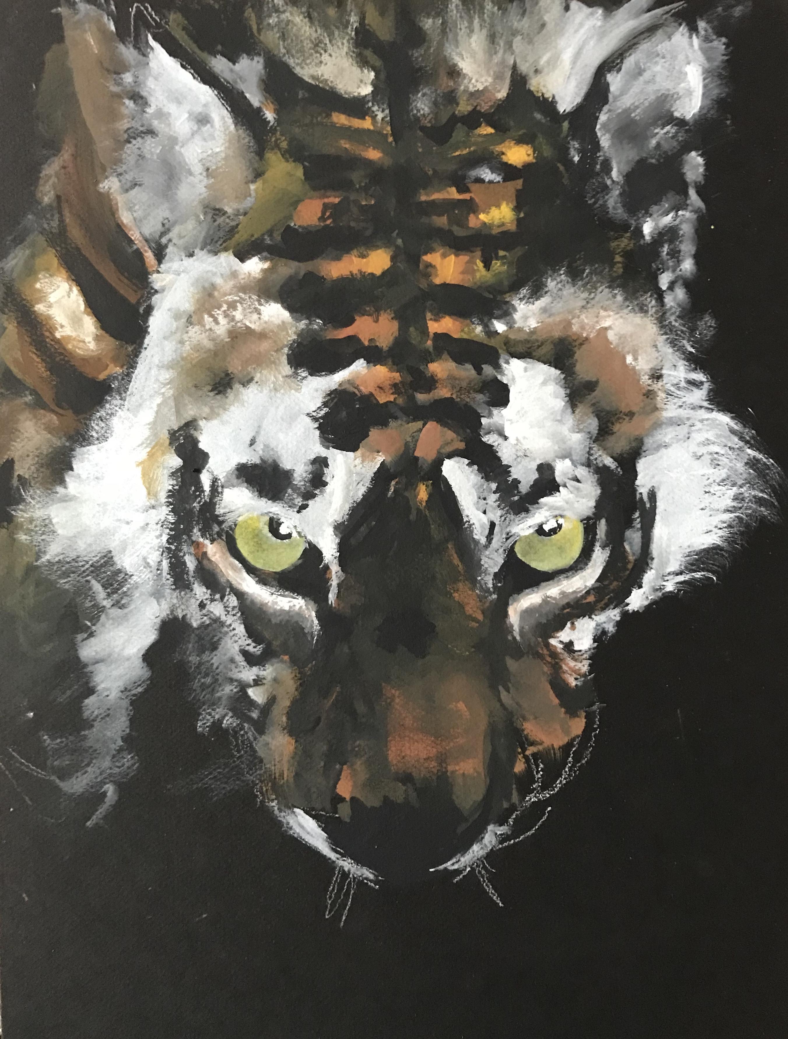 234-drinkende tijger/gouache op zwart karton 30x40cm