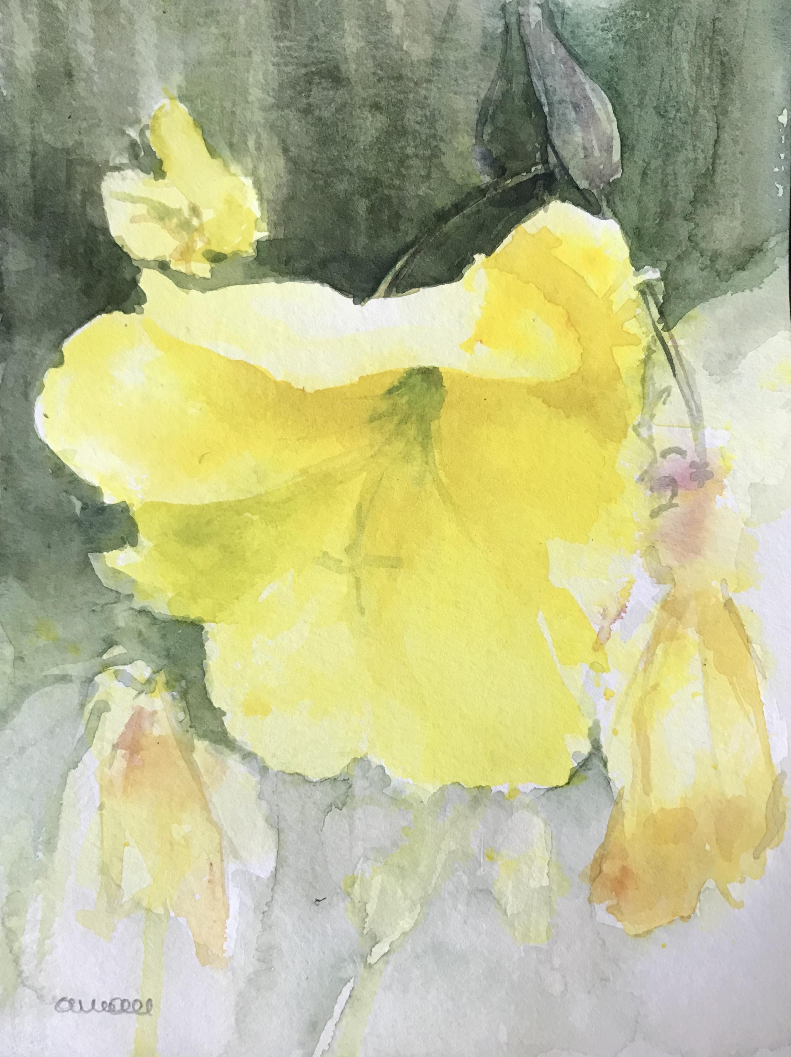 242- grote teunisbloem/aquarel 14x18cm