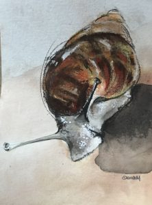 S-250-snail/mixed media