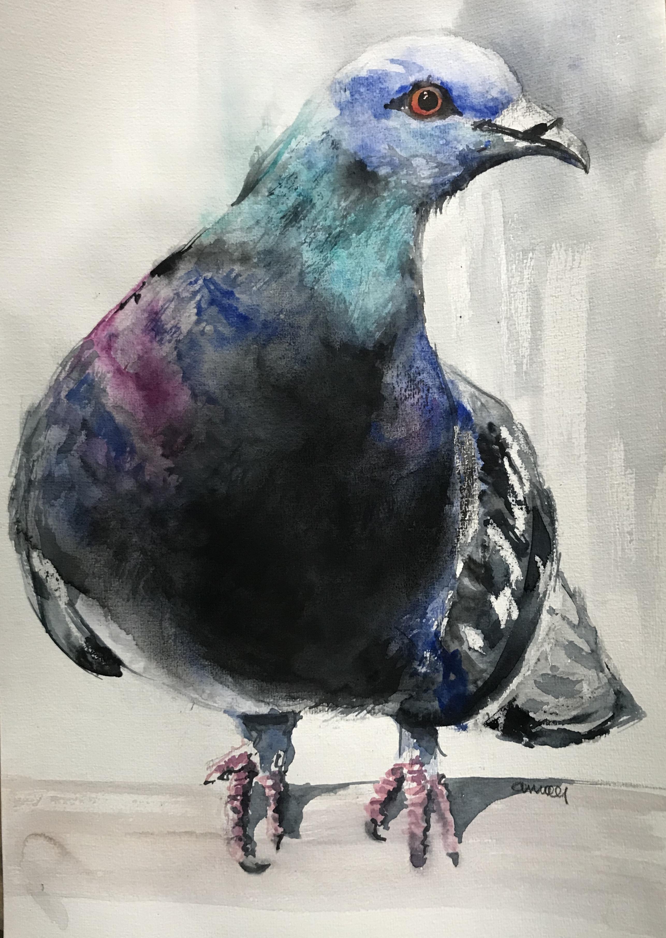 S-251 pigeon/aquarel 30x40cm