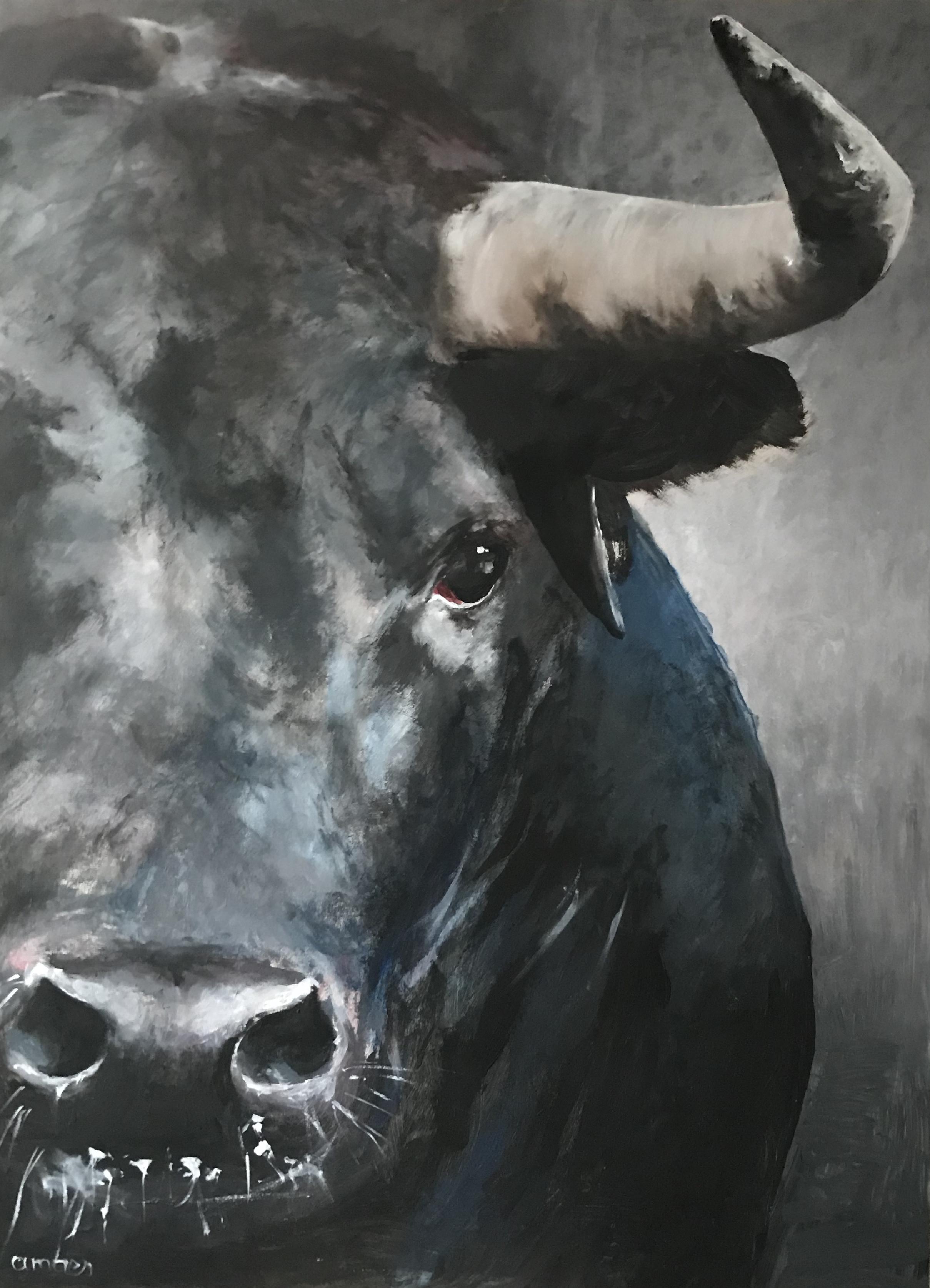 S-261-Bull acryl 60x80cm